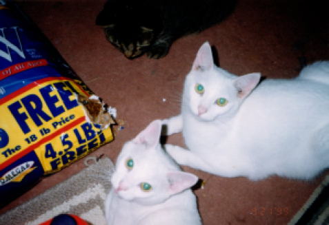 Bucky and Louis the white Cats in the bag